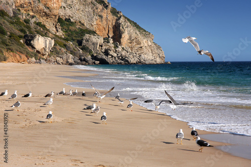 cliff and seagulls in Sesimbra, Portugal © chrupka