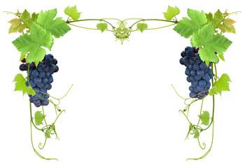 cadrage vigne et raisin