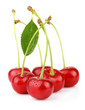 Bunch of wet ripe cherry berries with green leaf isolated