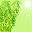 Bambus HG