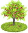 Heartshaped apples in an appletree