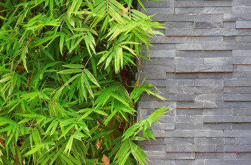 wall with Bamboo