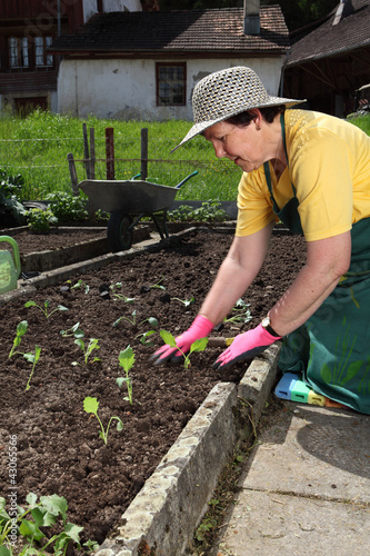Senior planting vegetable seedlings