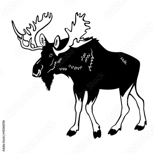moose male black white isolated on white