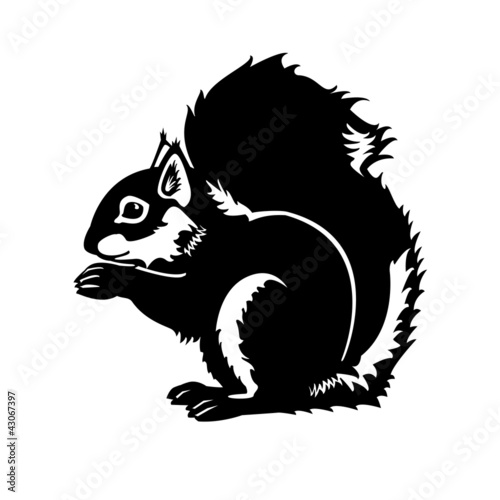 squirrel black white isolated on white background