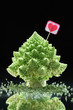 Romanesco cabbageon black background/ Christmas still life