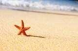Fototapety starfish in vacations