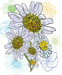 Chamomile bouquet watercolor