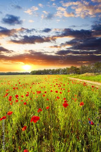 czerwone maki na tle nieba słońca