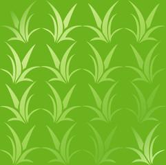 Sfondo Aloe sfumato