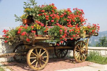 old wooden cart with pots of Geraniums flowers
