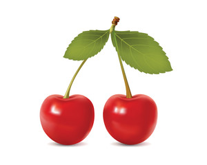 Beautiful cherry. realistic vector illustration