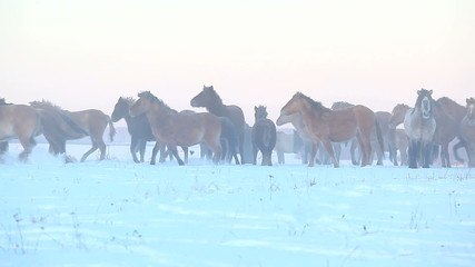 herd of horses on the winter field running away