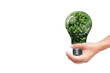 hand holding Bulb with tree inside isolated on white background