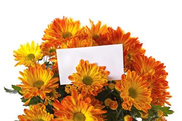 Chrysanthemum with a card