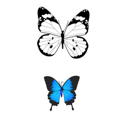 isolated butterflies