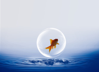 gold fish with abstract water background