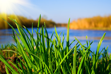 green grass on the bank of the river on a sunny day