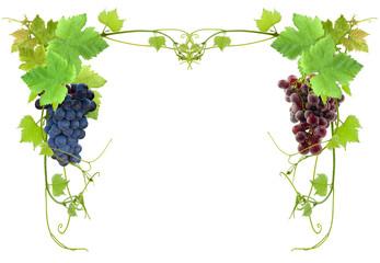 cadre de vigne