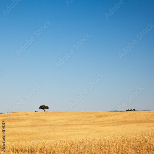 Tree in Golden Field