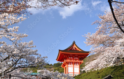 Shrine with cherry blossom
