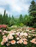 Fototapety Rose Garden