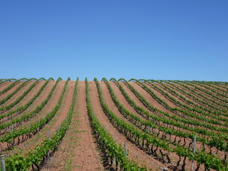 Jakobsweg Weinberge Rioja