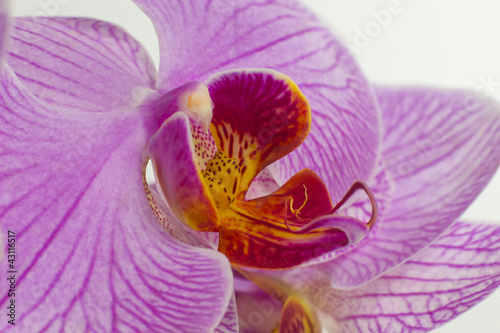 Fototapeten,orchidee,blume,blume,blühen
