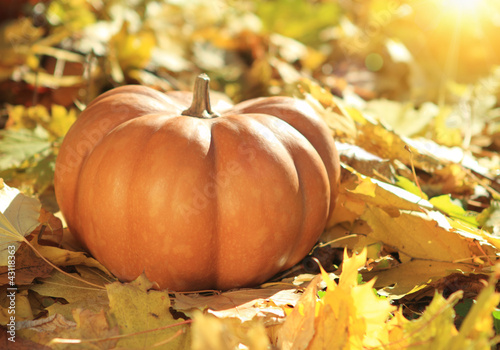 Halloween pumpkin on leaves in woods