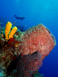 Giant Barrel Sponge, Turk and Caicos poster