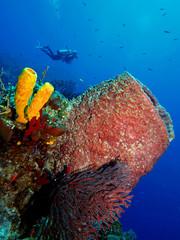 Giant Barrel Sponge, Turk and Caicos