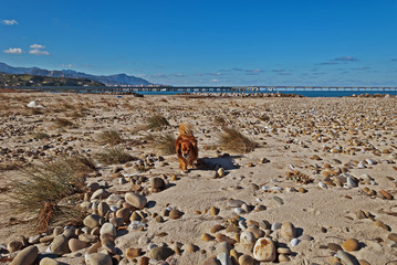 Le spiagge in inverno