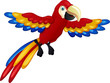 funny macaw bird cartoon