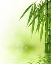 Bamboo Border ou Arrière-plan
