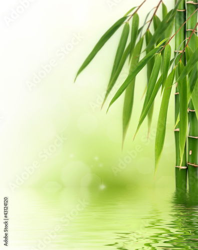 Bamboo border or background