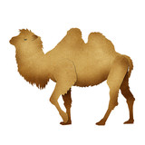 Papercut Camel Recycled Paper poster
