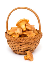 basket with chanterelle mushrooms