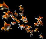 Fototapete Tier - Aquarium - Fische