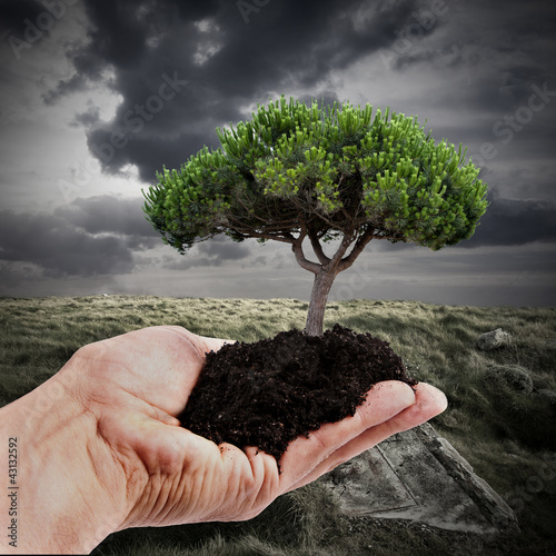 repoblación y desarrollo sostenible, concepto