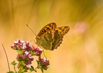 Mariposa amarilla sobre flor