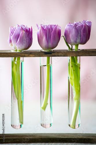 trzy-fioletowe-tulipany-w-malym-szklanym