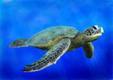 Fototapete Meer - Natur - Reptilien / Amphibien