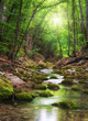 Leinwanddruck Bild - River deep in mountain forest