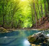 Fototapete Schönheit - Schlucht - Wald