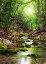 """Постер, картина, фотообои """"River deep in mountain forest"""""""