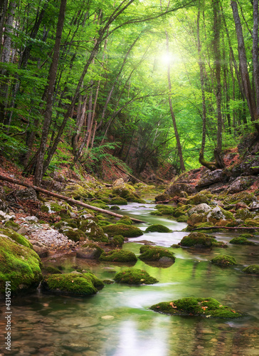 Leinwanddruck Bild River deep in mountain forest