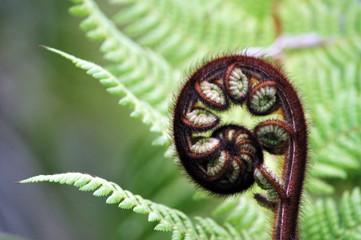 Fern Frond, New Zealand