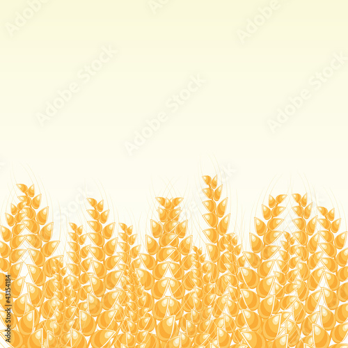 Wheat Post Card with Place for Text