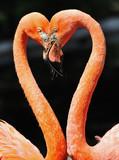 Fototapety Flamingos 2