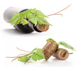 Bottle of wine, cork and leaves of the vine. Isolated on white